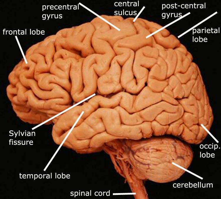 Delaware Neuroscience
